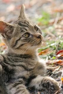 cat0095-066.jpg